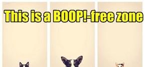 No Nose-boops!