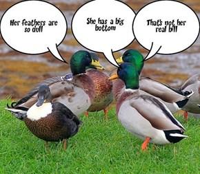BIRD TALK!