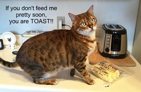 If you don't feed me pretty soon,  you are TOAST!!
