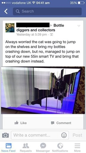 Never Doubt a Cat's Ability to Ruin Your Life