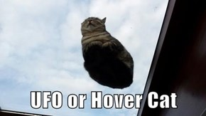 UFO or Hover Cat