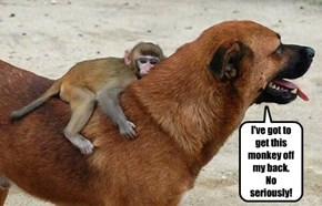 I've got to get this monkey off my back.  No seriously!