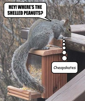 HEY! WHERE'S THE  SHELLED PEANUTS?