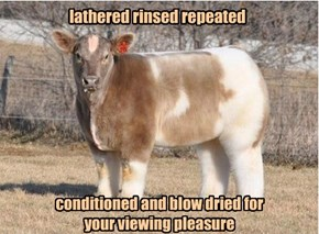 That's Some Fancy Pasture You Got There