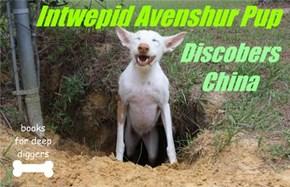 Intwepid Avenshur Pup