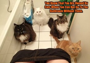 You Know That You Are Owned By Cats When You Can Not Go To The Bathroom Without Them.