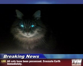Breaking News - All cats have been possessed. Evacuate Earth immediately.