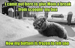 Callz Feline One One!