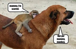 not yer mommy