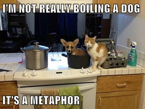I'M NOT REALLY BOILING A DOG  IT'S A METAPHOR