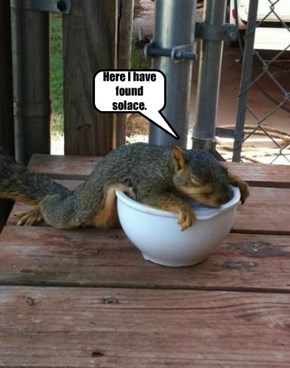 The Squirrel Has Found Solace