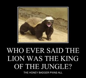 WHO EVER SAID THE LION WAS THE KING OF THE JUNGLE?