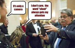 Grayson the broad-winged hawk watches his handler like a, well, you know