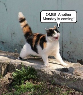 Kitty Sees Monday Coming ...  Apparently this happens every Week!