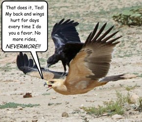 That does it, Ted! My back and wings hurt for days every time I do you a favor. No more rides, NEVERMORE!!