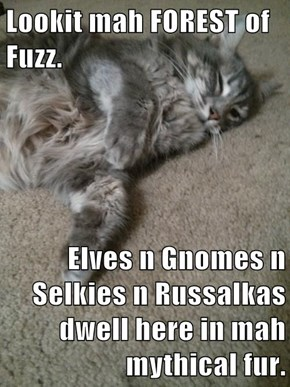 Lookit mah FOREST of Fuzz.  Elves n Gnomes n Selkies n Russalkas dwell here in mah mythical fur.