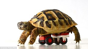 To Help a Turtle With Healing Legs, One Vet Custom-Made a LEGO Kit!