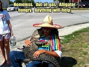 Homeless.   Out  of  gas.   Alligator  hungry.   Anything  will  help.