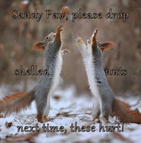 Sandy Paw, please drop shelled                  nuts next time, these hurt!