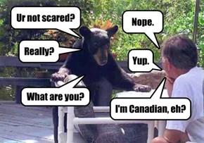 Canadian Nerves of Steel