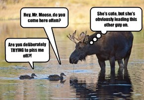 The Watering Hole Is Always Full Of Drama.