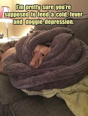 Take two strips of bacon and call the vet in the morning.