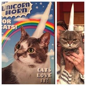 Smokey Loves Being a Unicorn