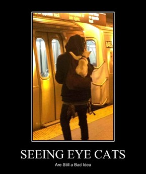 SEEING EYE CATS