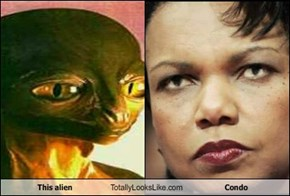 This alien Totally Looks Like Condo