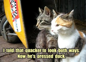 I  told  that  quacker to  look  both  ways.  Now  he's  pressed  duck.