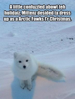 A little confuzzled abowt teh holidaiz, Mittenz desided ta dress up as a Arctic Fawks f'r Christmas.