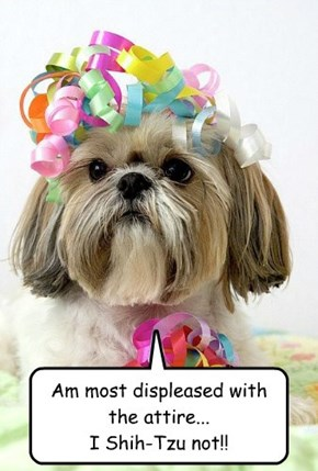 Am most displeased with the attire... I Shih-Tzu not!!