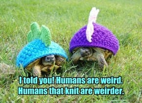 I told you! Humans are weird. Humans that knit are weirder.