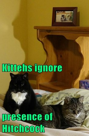 Kittehs ignore presence of Hitchcock
