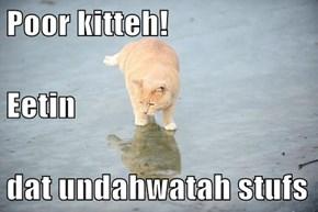 Poor kitteh!  Eetin dat undahwatah stufs