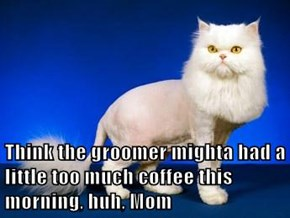 Think the groomer mighta had a little too much coffee this morning, huh, Mom