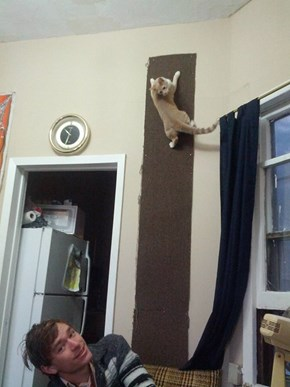 Your Cats Deserve a Climbing Wall too