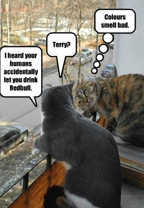 After being awake for an entire hour, Terry was delerious.