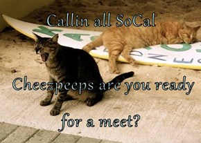 Callin all SoCal   Cheezpeeps are you ready for a meet?