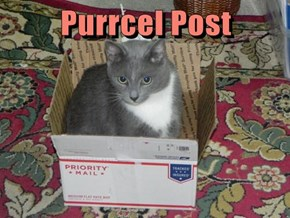 Purrcel Post