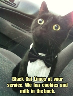 Black  Cat  Limos  at  your  service.  We  haz  cookies  and  milk  in  the back.