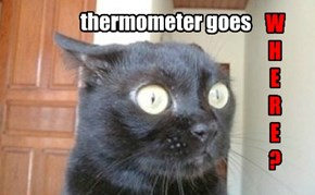 THERMOMETER CAT, PART ELEBENTY