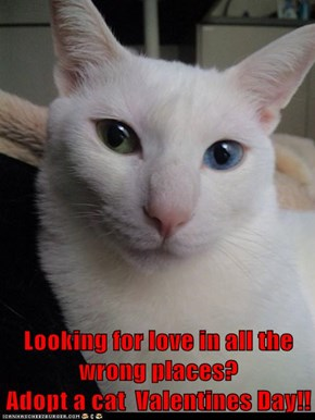 Looking for love in all the wrong places?                           Adopt a cat  Valentines Day!!