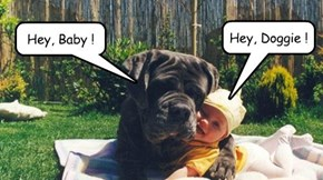 15 Pets Love Their Baby Valentines