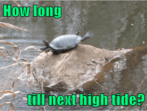 I've Been High Centered By Low Tide