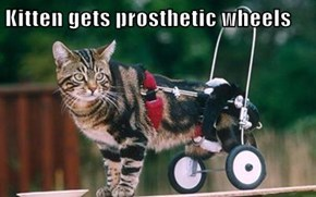 Kitten gets prosthetic wheels