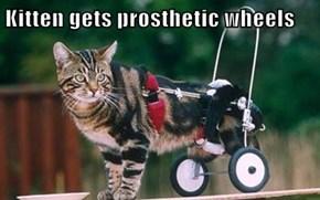 Kitten gets prosthetic wheels