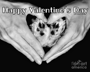 Happeh Valentimes Day tah all fur baby's!
