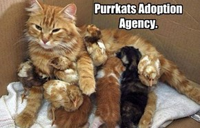 Purrkats Adoption Agency.