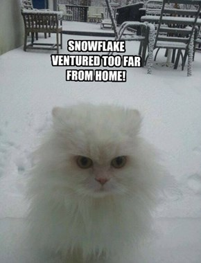 SNOWFLAKE VENTURED TOO FAR FROM HOME!